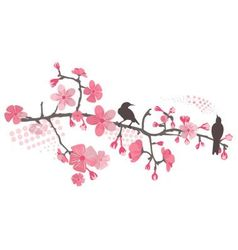 cherry tree with flower vector image
