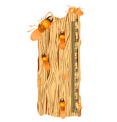 Kids height chart with termite on soft wood vector