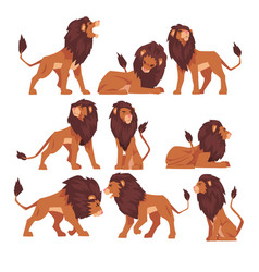 proud powerful lion collection mammal wild cat vector image