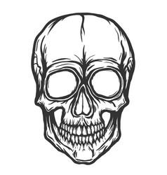 Skull isolated on white background vector