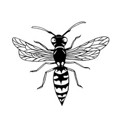 Wasp cartoon sketch style insect coloring page vector