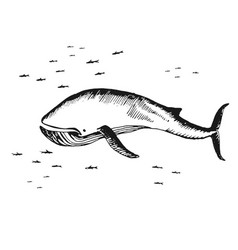 marine whale surrounded by small fish vector image