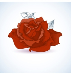 Red rose design vector image vector image