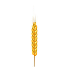 dry wheat spikelet icon cartoon style vector image vector image
