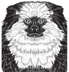 Monkey marmoset vector