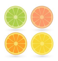 set of lemon orange lime grapefruit slices vector image
