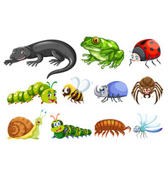 different types of insects vector image