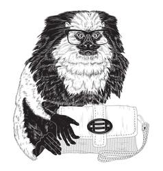 Glamorous fashion marmoset vector image