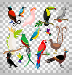 exotic tropical birds on transparent background vector image vector image