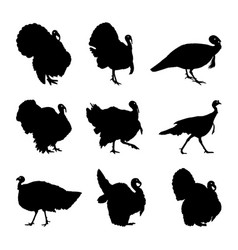 turkey silhouette set vector image