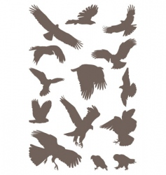 birds predator vector image vector image