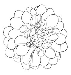 beautiful monochrome black and white dahlia vector image