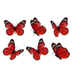 butterflies realistic colored insects beautiful vector image