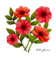 flowers red poppies on white background vector image