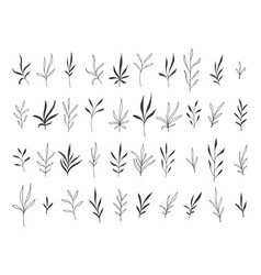 Hand drawn botanical decorative design elements vector