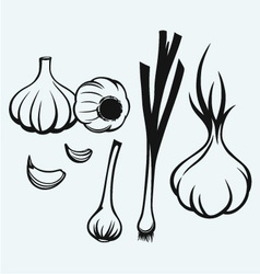 Heads of garlic vector image