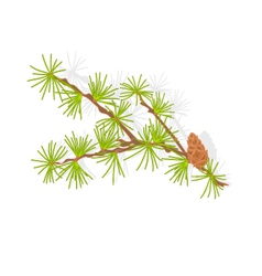 Larch tamarack branch christmas tree vector