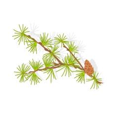Larch tamarack branch christmas tree vector