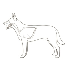 Respiratory system of the dog vector image