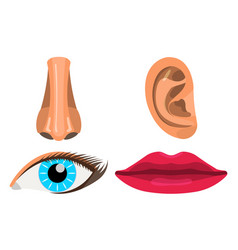 set of woman body part face body icon label vector image