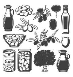 Vintage natural olive collection vector