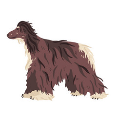 Afghan hound hunting breed flat vector