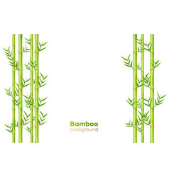 bamboo background exotic garden plants and vector image