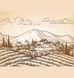 hand drawn vineyard landscape vector image