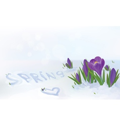spring snow flowers vector image