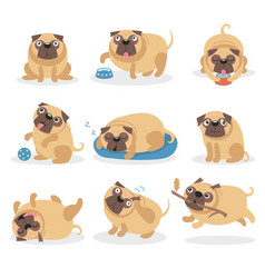 cute funny pug dog set dog in different poses and vector image