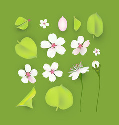 apple and cherry flower and leaves set realistic vector image