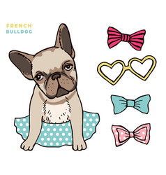 French bulldog cute puppy bulldog vector