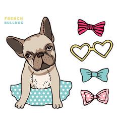 French bulldog cute puppy bulldog with vector