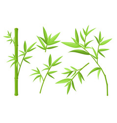 Green bamboo stem and leaves colorful vector