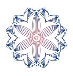 mandala ornament image vector image