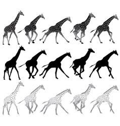 running and walking giraffes vector image