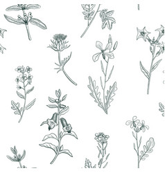 Seamless pattern with drawing herbs and flowers vector