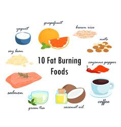 top ten fat burning fat foods vector image vector image