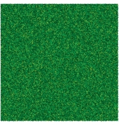 Abstract texture with green lawn grass vector