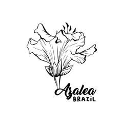 Azalea ericaceae flowers ink pen sketch vector