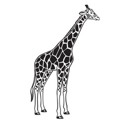 giraffe isolated black icon vector image