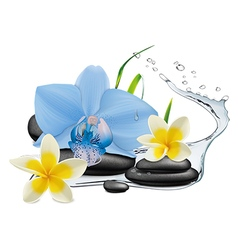 Plumeria Orchid flowers water splash and zen sto vector image