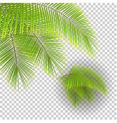 Set beautiful palm tree leaves on transparent vector