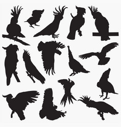 silhouettes cockatoos vector image