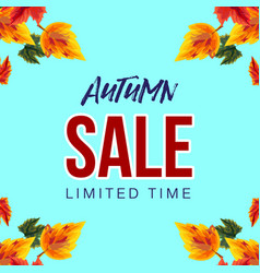 stylish colorful banner with autumn sale vector image