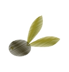drawing olive with leaves tree vector image