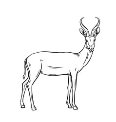 antelope outline vector image