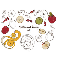 Apples and berries set vector