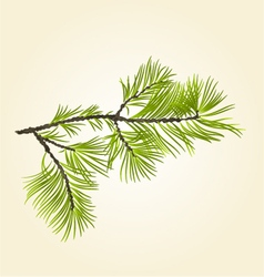 Branch Pine conifer natural background vector