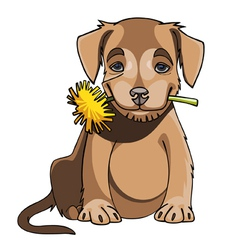 cartoon cute puppy holding a dandelion in mouth vector image